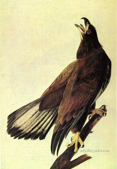 234 Best Images About Eagle Art On Pinterest Eagle
