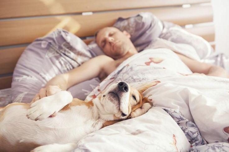 Resultado de imagen de dormir con tu mascota