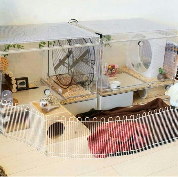 hedgehog cage                                                       … …