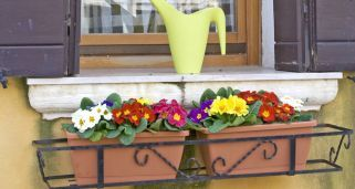 Plantas de invierno para el balcón                                                                                                                                                                                 Más