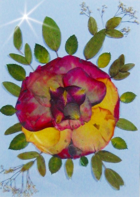 pressed flower picture - roses and more...