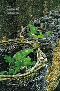 What you don't know about growing rhubarb, but probably should. This is a good idea to protect plants from deer!