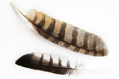 owl feather tattoo designs...more inspiration