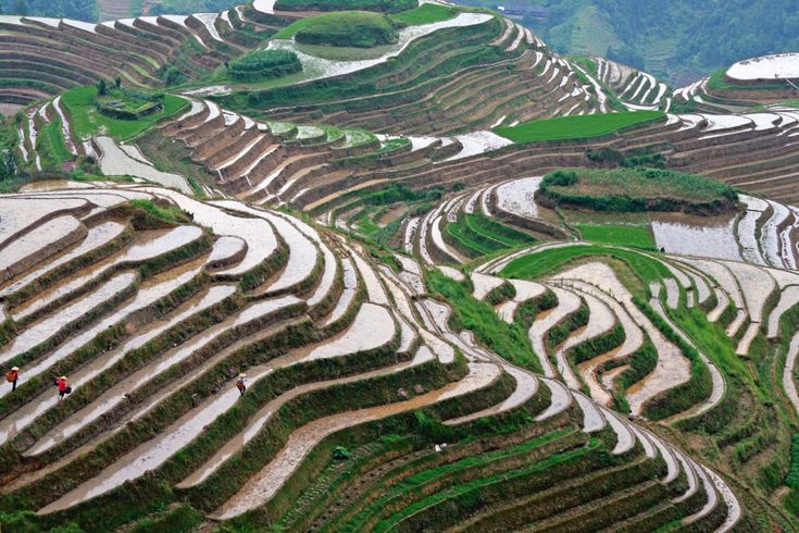 9 000 years origin of farmed rice gets pushed back for The meaning of terrace