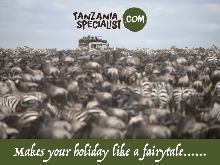 Gain the unbelievable experience in Serengeti National Park which is famed for its annual migration of zebras, wildebeests, giraffes. Here you can enjoy the large herds of these animals in their grazing areas and other activities.