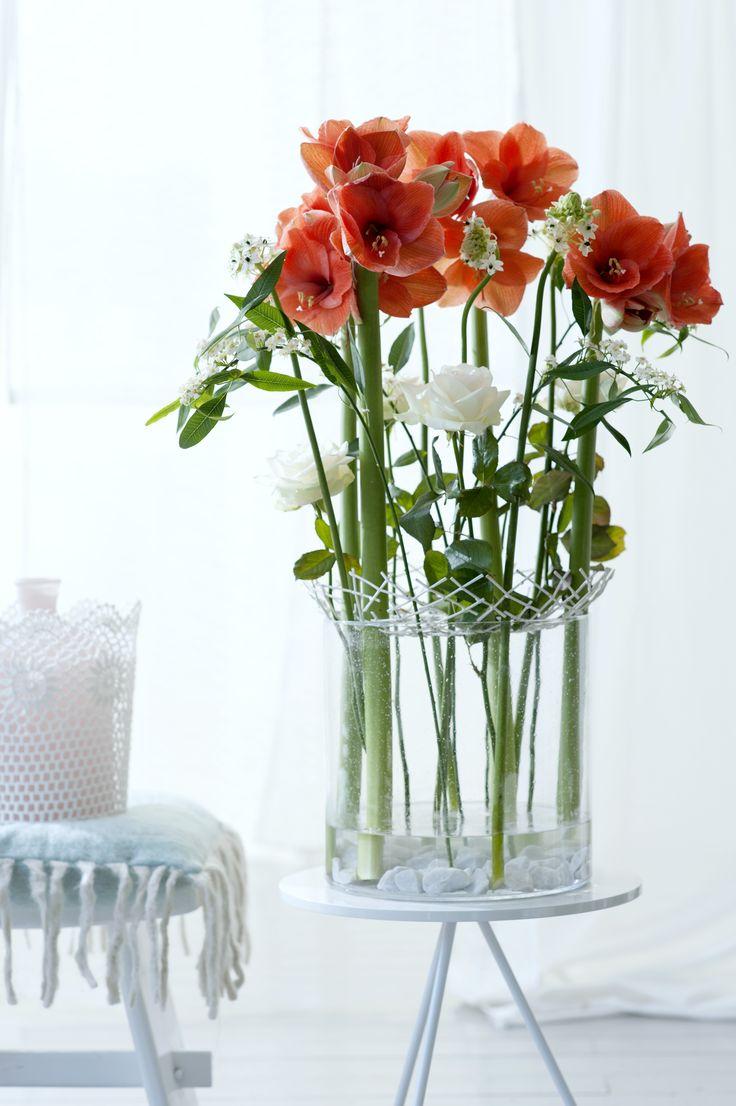 An elegant display of Amaryllis #flowers