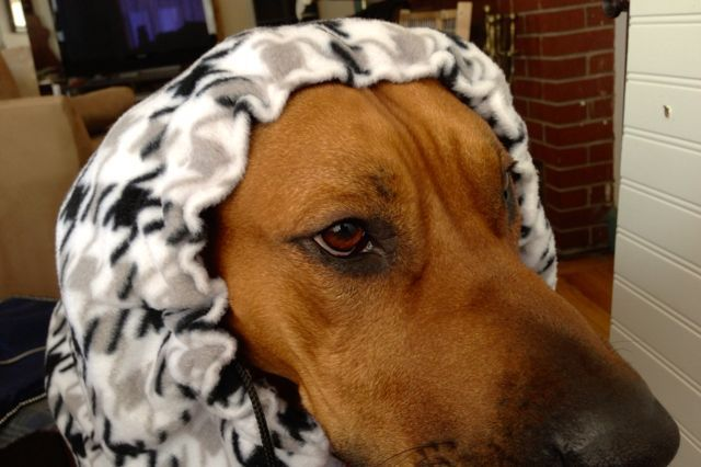 Diy Fleece Dog Snood Sewing For The Puppy Dogs
