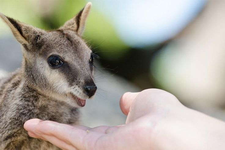 Wallaby Experience for 2 or 4