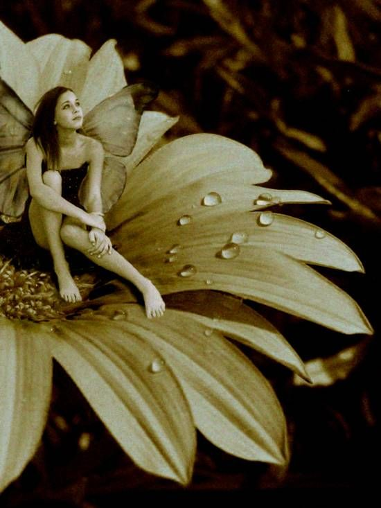 Fairy photo manipulations - Google Search