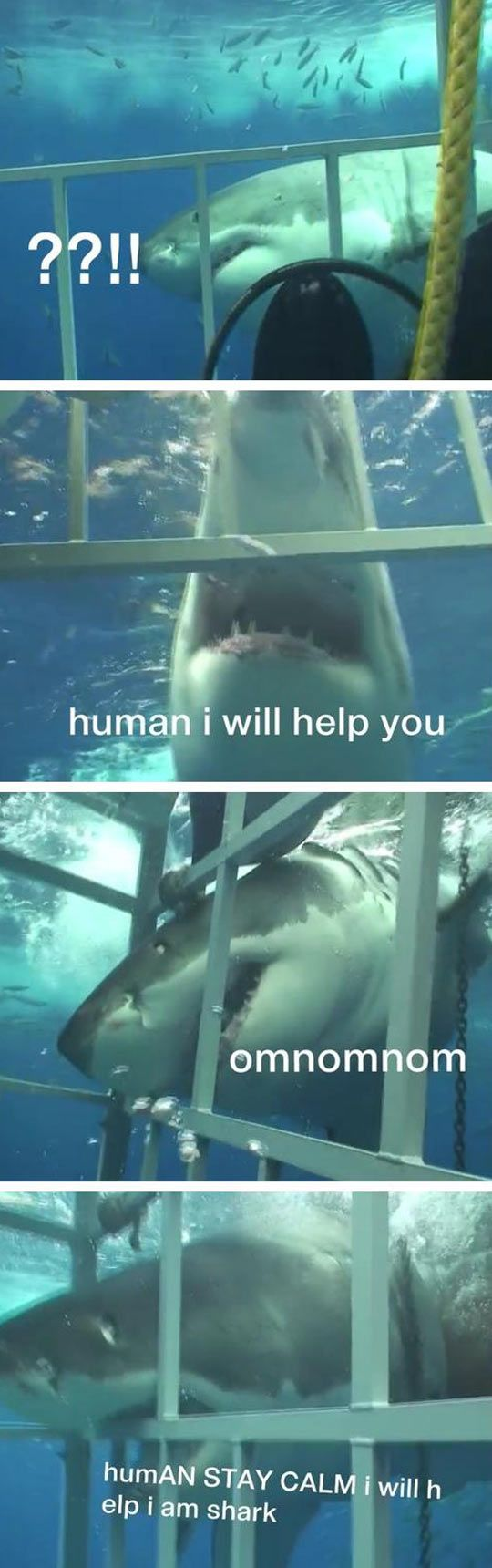 No thanks, shark, you're a pal and all, but really I'll be okay...