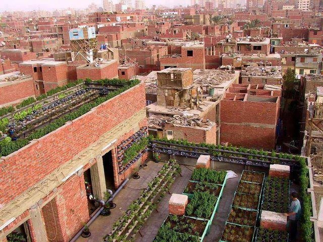 Roof top gardens in Egypt produce food