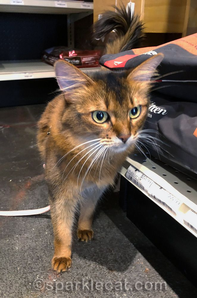 My Pet Store Visit On World Cat Day In 2020 World Cat Day Pets Pet Store