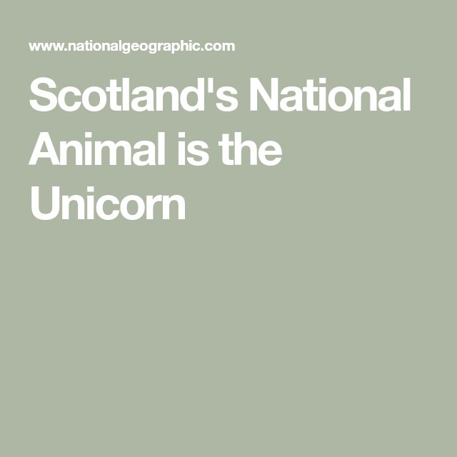 Scotland's National Animal is the Unicorn