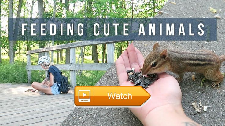 Weekly Vlog l Feeding Cute Animals  Keep up with me instagram Twitter Snapchat taylorparka contact email  on Pet Lovers