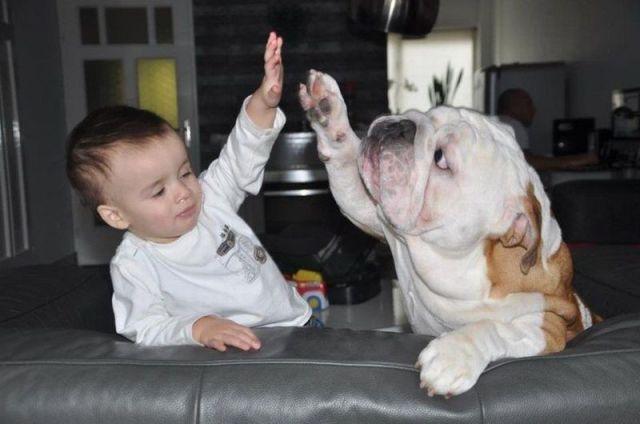 """high five!   """" Cute Pets, Animals """"   Pinterest"""