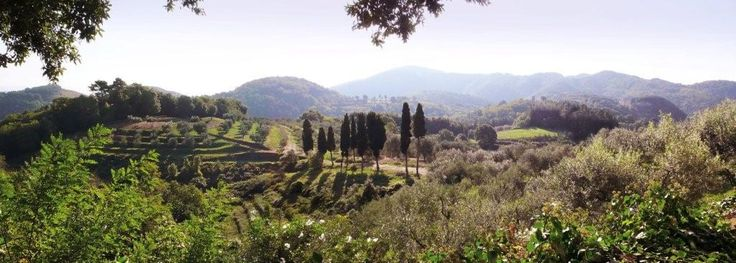 https://flic.kr/p/87unbf | Casanova di Chiatri: View from House | Nothing's better than a view of the rolling hills of the Tuscan countryside.  The greens of the cyprus, oak and evergreen, the golden grains, the grapevines and olive groves make Tuscany unlike anywhere else in the world. It's pleasant all year round, why not avoid the crowds and come in the winter?  Check out the weather right now near the Casanova di Chiatri by clicking on the link…