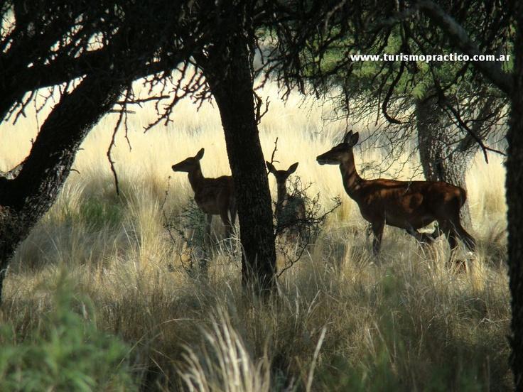 Reserva Natural Pedro Luro, Santa Rosa. Pcia. de La Pampa.