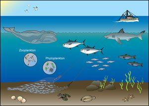 Marine Environments & Ecosystem | Games, activities, free ...