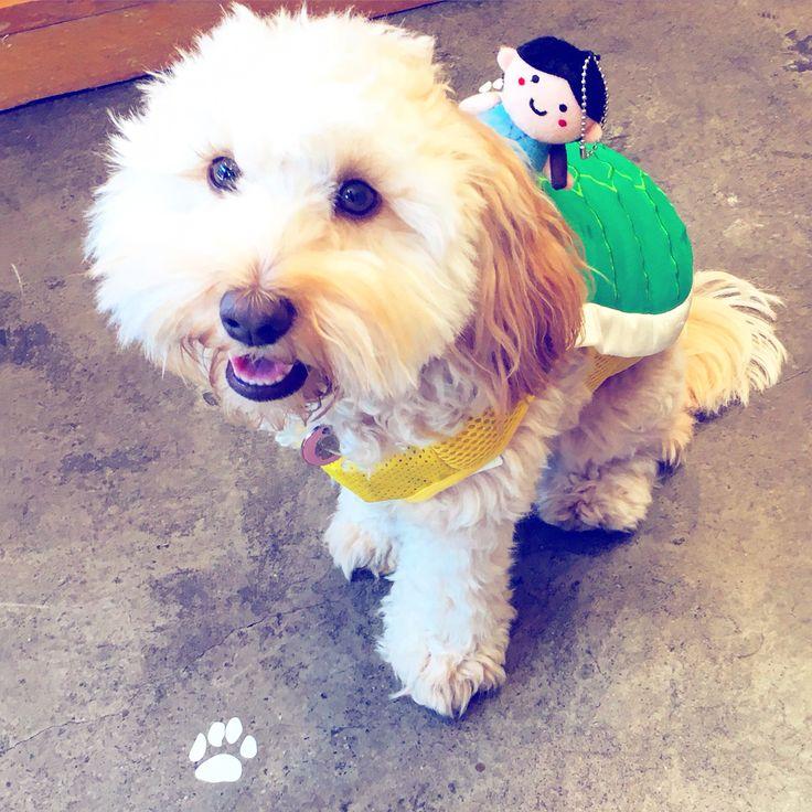 Turtle #muffin #happyhalloween