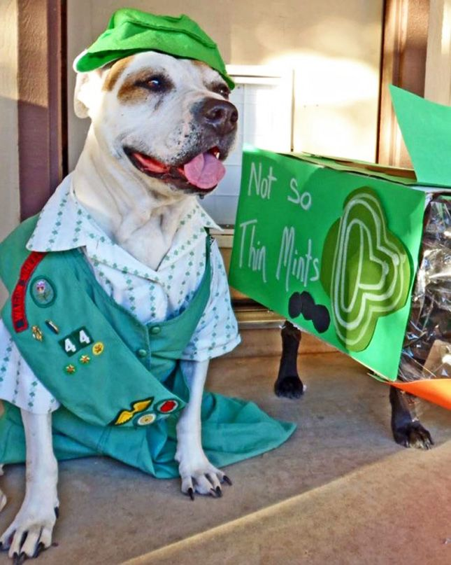 best 20 best dog halloween costumes ideas on pinterest pet halloween costumes dog halloween and dog halloween costumes - How To Make A Dog Halloween Costume