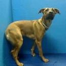 Brooklyn NY.  Hope.  Female.  2 yrs.  Dies in a.m.  See Urgent Part 2 on fb.