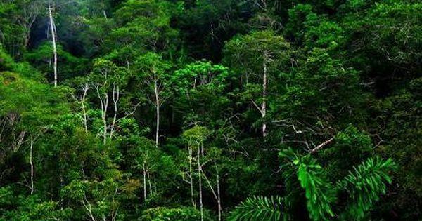 Image result for high resolution rainforest pictures | VaporIz | Pinterest