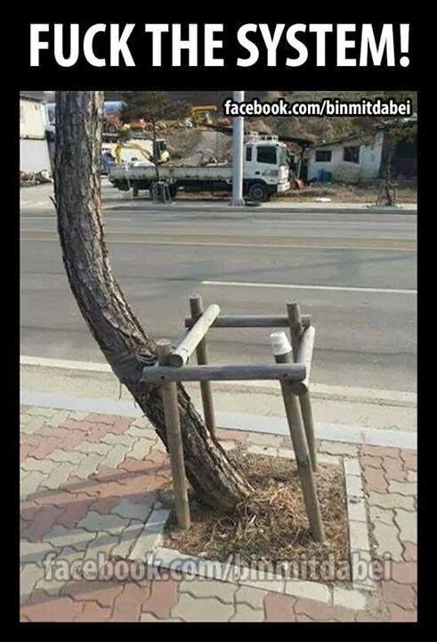 Fuck On Tree 119