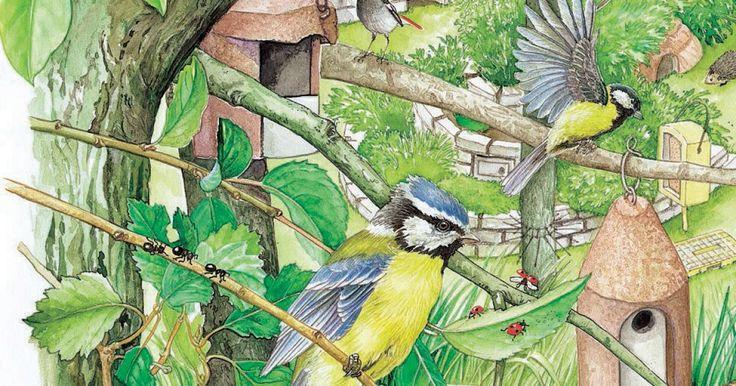 Vögel sind gern gesehene Gäste in unseren Gärten. Hier finden Sie die besten Tipps, wie Sie Ihren Garten in ein Vogelparadies verwandeln können.