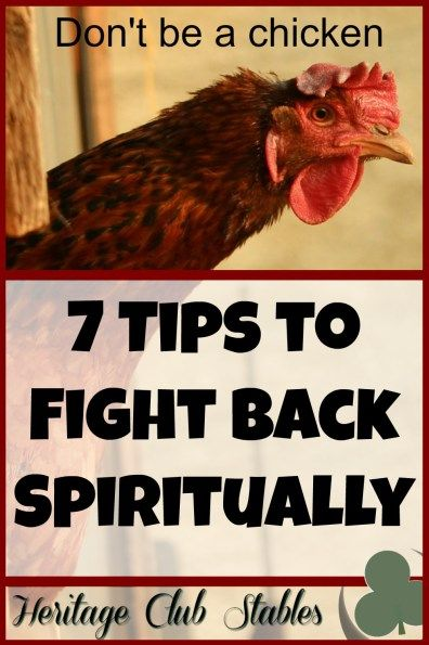 7 tips to fight back spiritually. Don't be a chicken. Learn what it takes to be a spiritual force so you aren't knocked down again and again.