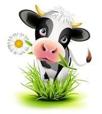 Lactose-intolerantie; zuivel en darmen zijn geen dikke maatjes, pas vooral op met melk als je darmen je lief zijn, lees verder op http://energiekevrouwenacademie.nl/energieke-vrouwen/hormonen/schildklierhormoon-je-bron-van-energie/