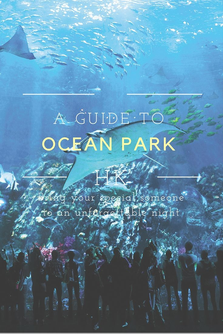 A guide to exploring Ocean Park Hong Kong WE HAVE TO GO TO HERE