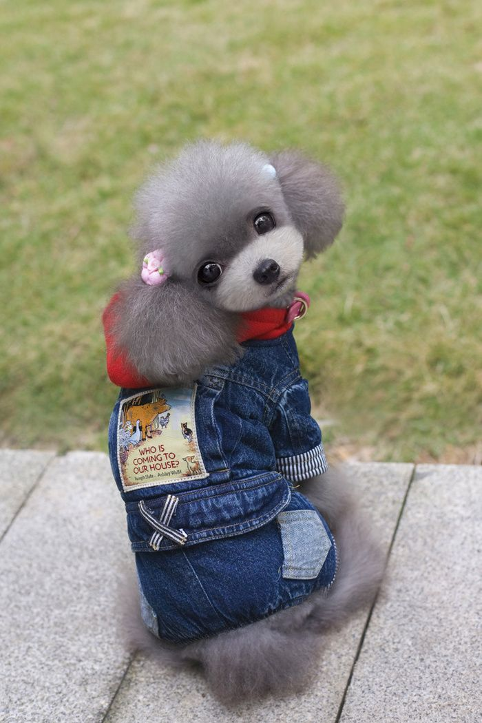 Thickened Pet Clothes Red Hat Four Leg Jeans Dog Clothes In 2020