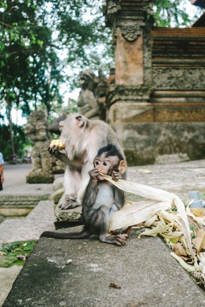 Ubud, Bali - The Londoner. This little dude looks so mischievous!