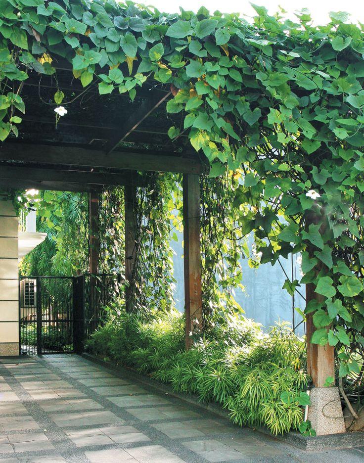 Menanam Pohon Untuk Atap Carport For The Home In 2019