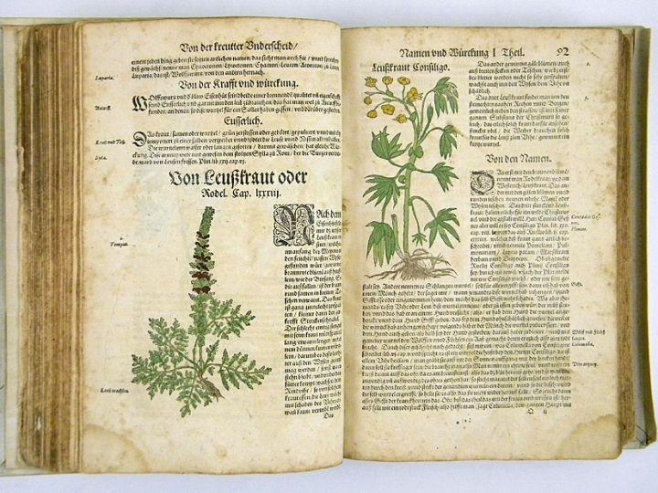 L'œuvre la plus importante de Bock est sa New Kreütter Büch qui paraît à Strasbourg en 1539. Si la première édition n'est pas illustrée, les suivantes le sont de 165 gravures sur bois. Les gravures originelles sont l'œuvre de David Kandel (1520-1592) mais d'autres sont extraites des livres de Brunfels et de Fuchs. Il donne, en allemand, des descriptions originales des plantes. Même si celles-ci ne sont pas très longues, Bock essaie de fournir des informations utiles à leur reconnaissance.