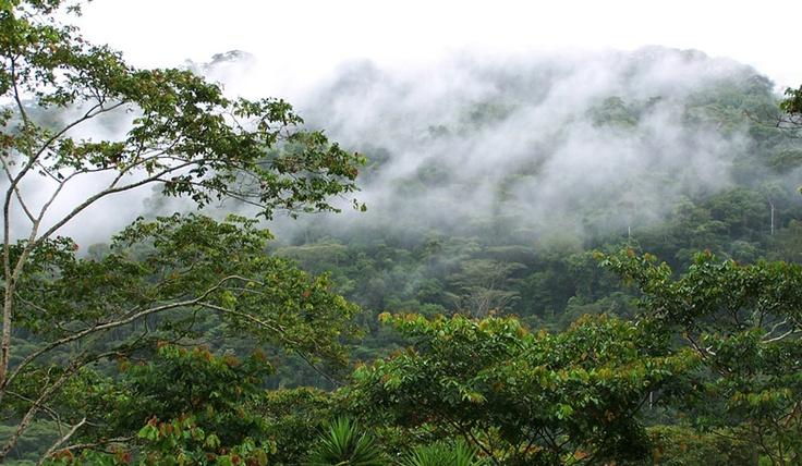 Neblina en los Cafetales de Villa Rica