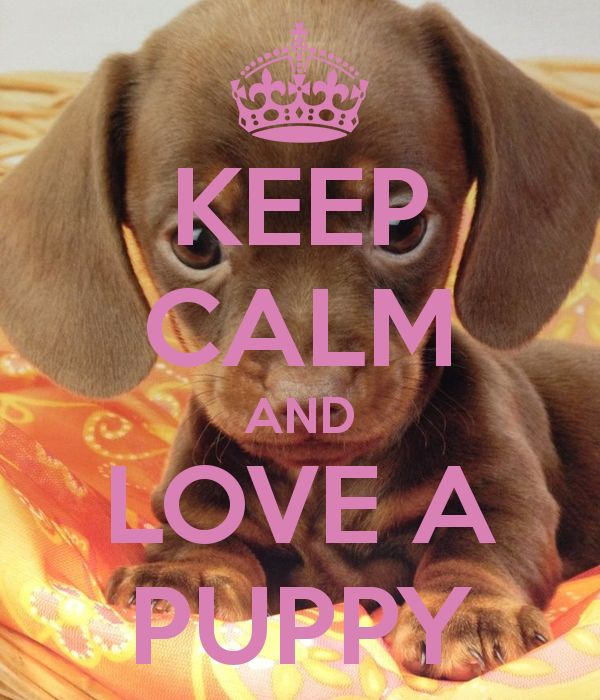 KEEP CALM AND LOVE A PUPPY