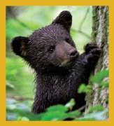 Black Bear cub - tree #06447