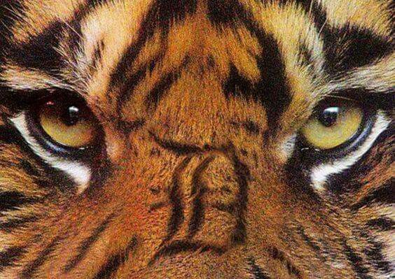 Detroit Tigers!!!!