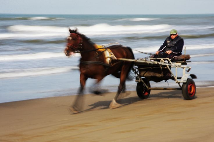 Clop - clopping on the beach 2 by Alessandra Ballerini  on 500px