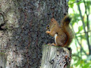 Ardilla comiendo frutos secos sobre un tronco