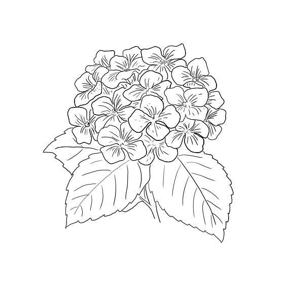 This Minimalist Hydrangea Design Is The Perfect For That Empty Spot On Your Wall Or For That Empty Frame Youve Had For Years This Is A With Images Hydrangea Print
