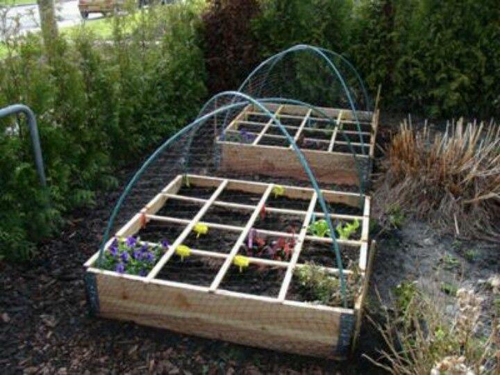 Dit is misschien meer iets voor in mijn tuin thuis, voorkomt dat alle kruiden elkaar overwoekeren.