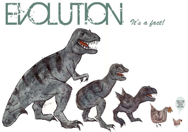 Characteristics of life: evolution. The evolution of the T-Rex