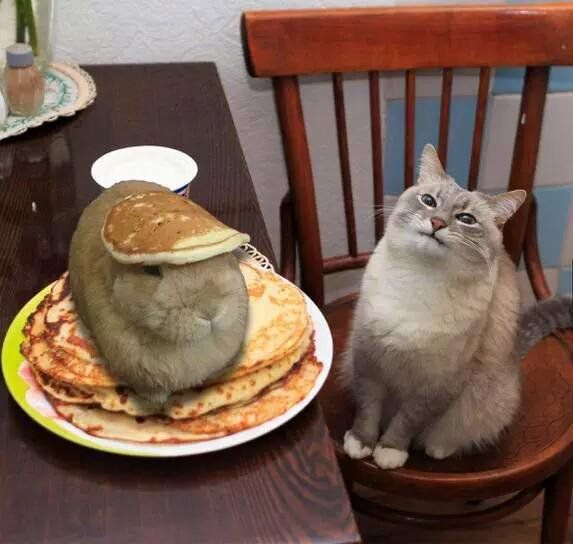 """""""Waiter... there's a hare in my pancakes!"""" Puns (@TheFunnyWorId) 