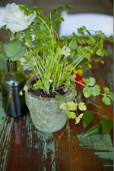 real plants for table decorations  wedding ideas