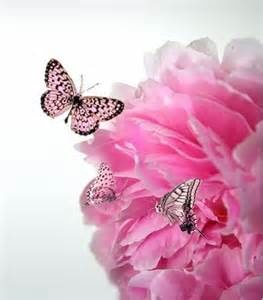 Pink Flower and Butterflies I love the color of both the flower and butterflies.