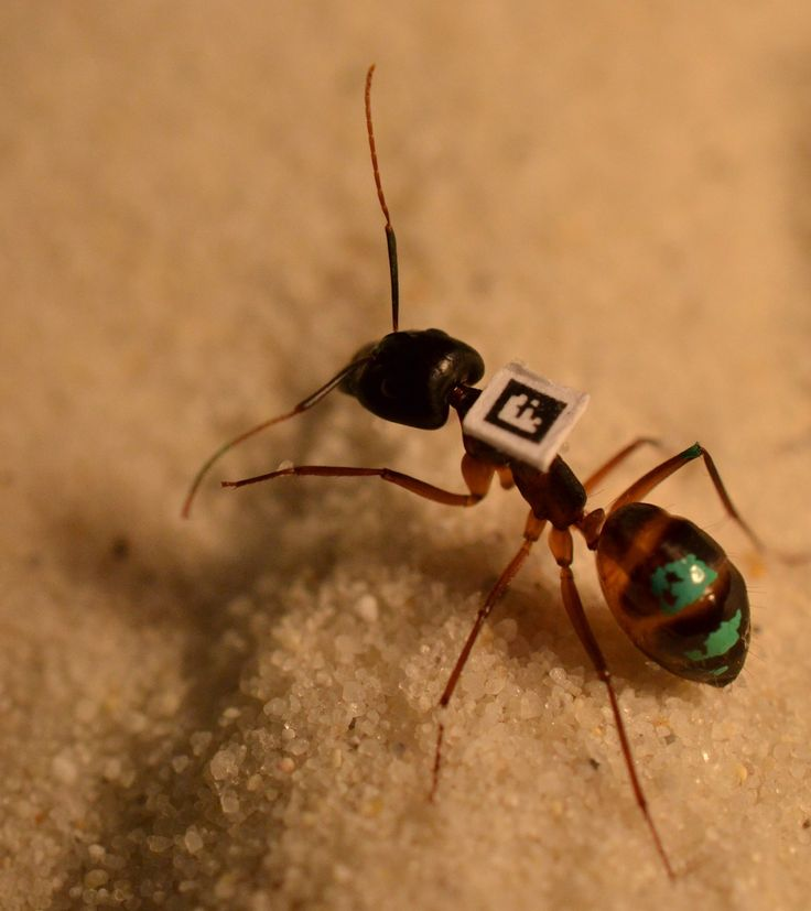Barcodes let scientists track every ant in a colony