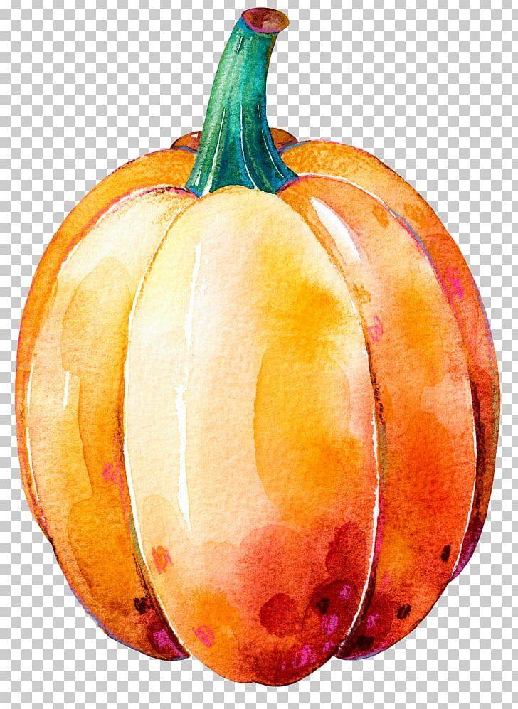 Pumpkin Calabaza Gourd Winter Squash Thanksgiving Dinner Png Aquarela Cucurbita Drawing Food Fruit Gourds Pumpkin Drawings