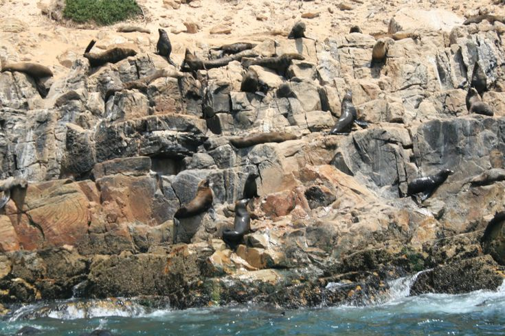 Marine cruise for seal colony and dolphin sighting